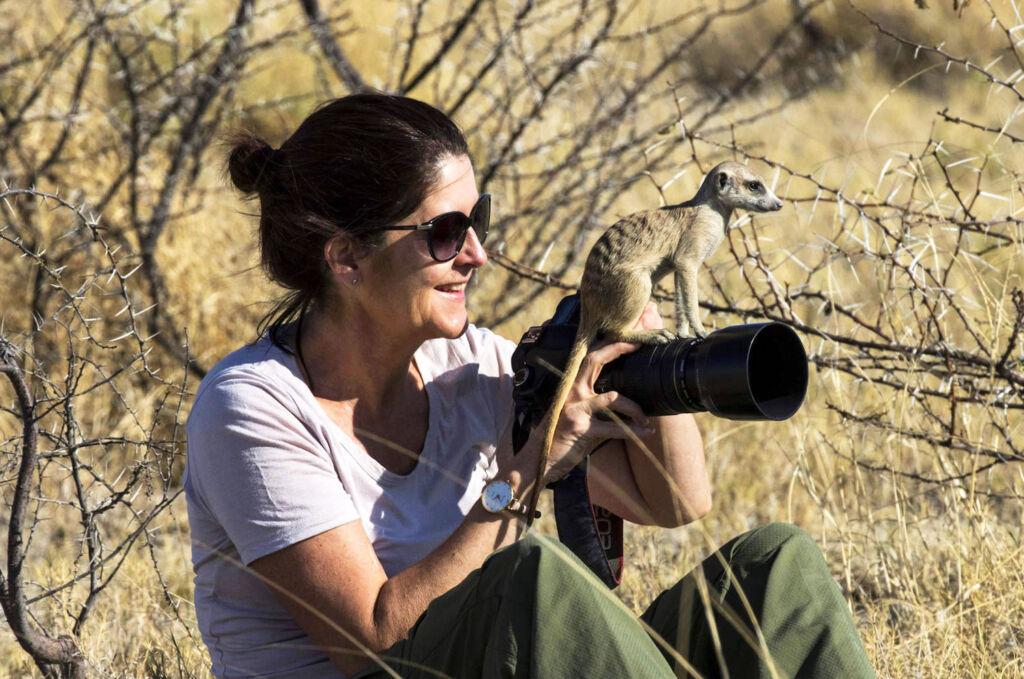 Meerkat resting on photographers camera