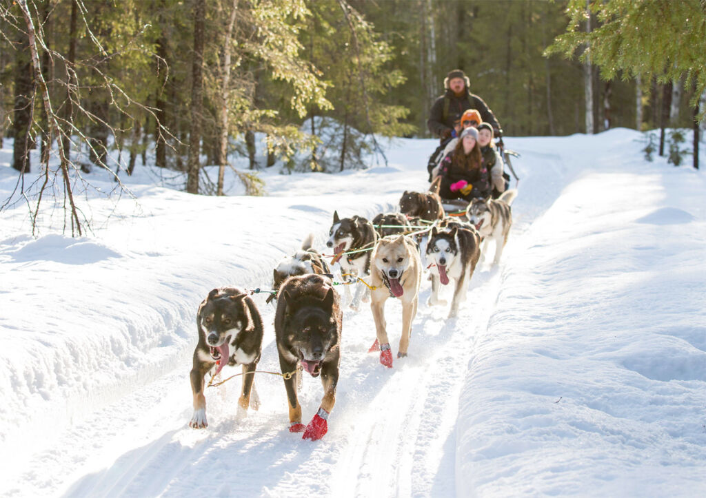 A dog sled ride in Swedish Lapland