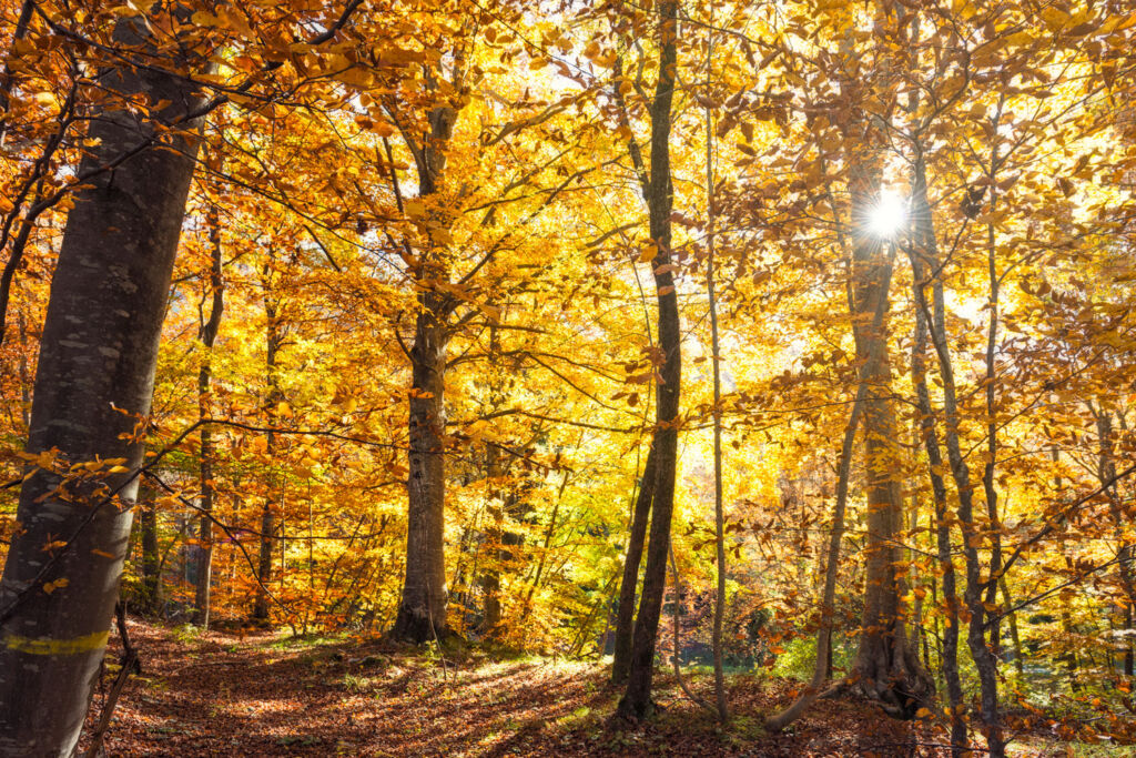Autumn trees with sunlight shining through in Trentino. Photo taken by Diego Marini.