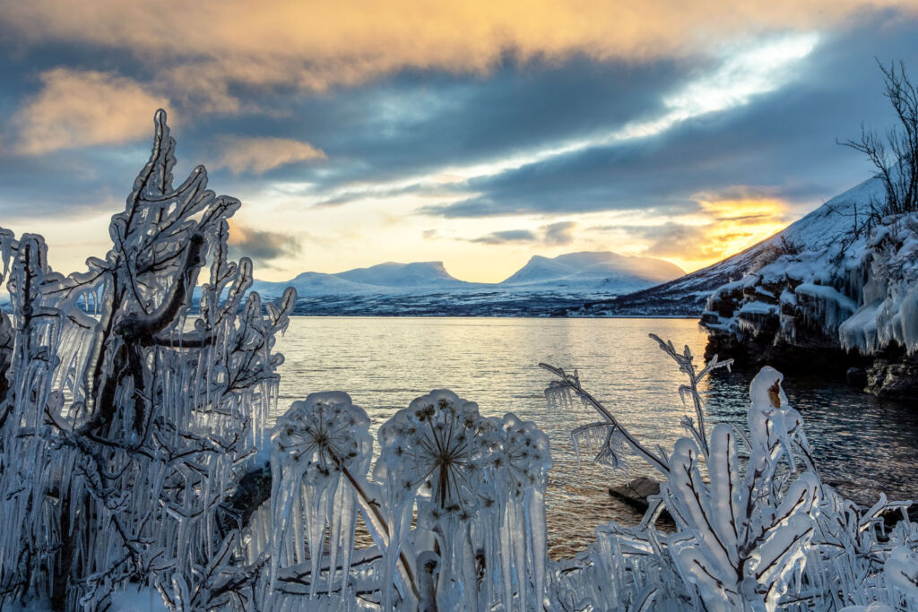 Frozen plants by a lake in Swedish Lapland