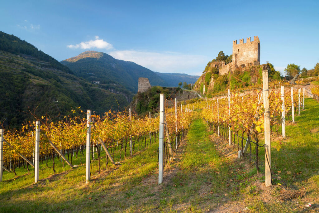 Autumnal vineyard in Vali de Cembra, photo by Alessandro Gruzza