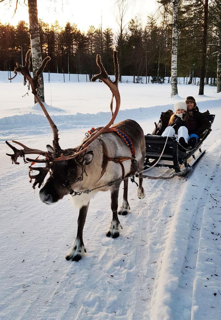 Reindeer sled ride in Swedish Lapland
