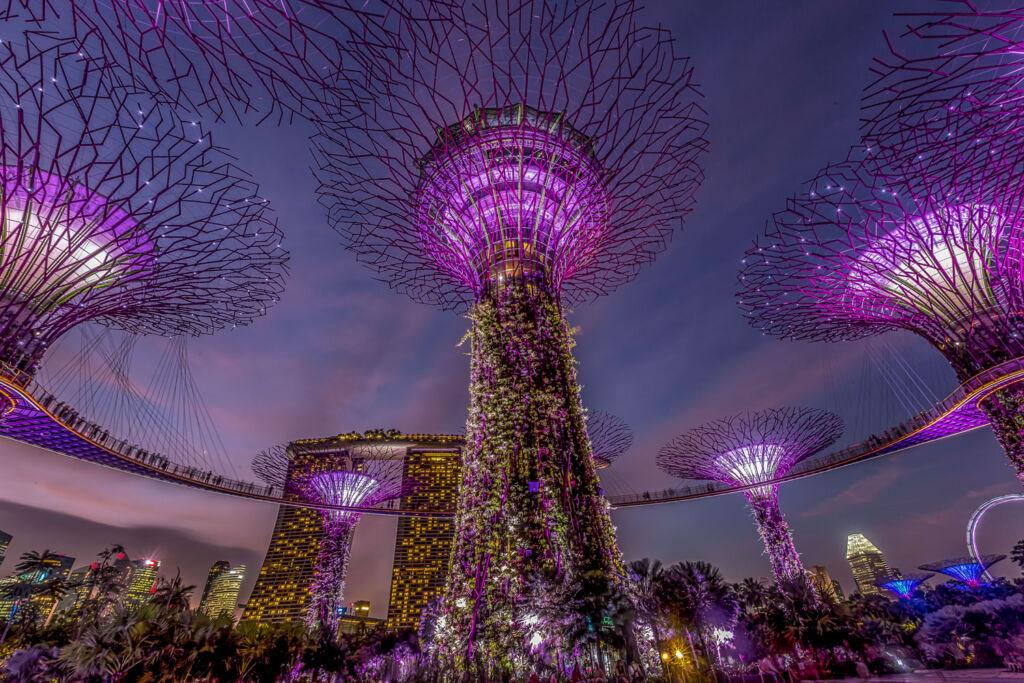 Singapores amazing supertree at Christmas