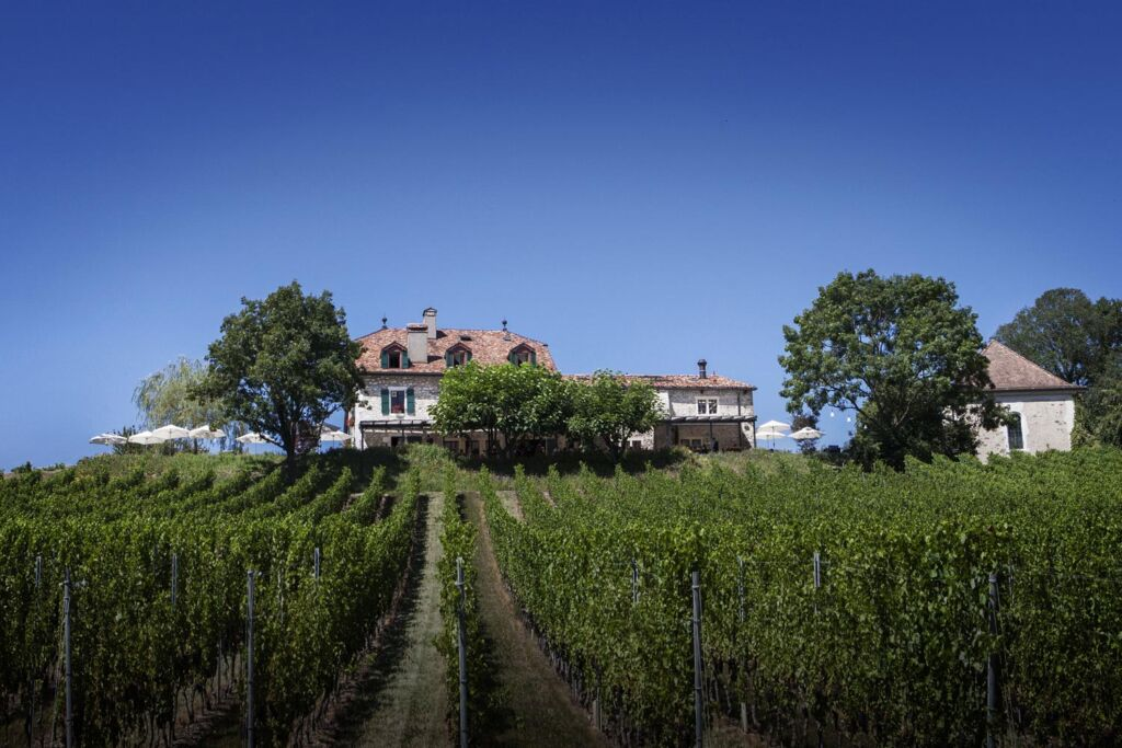One of the beautiful vineyards in Switzerland