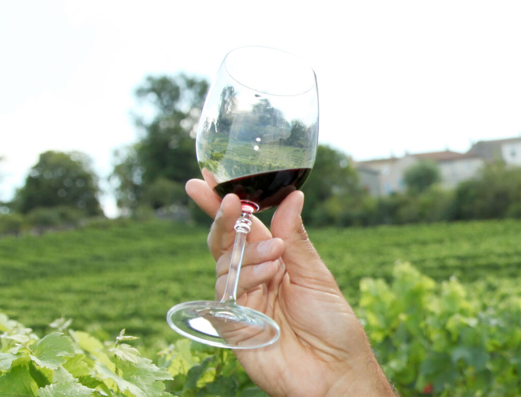 A person holding up a glass of red wine in a vineyard