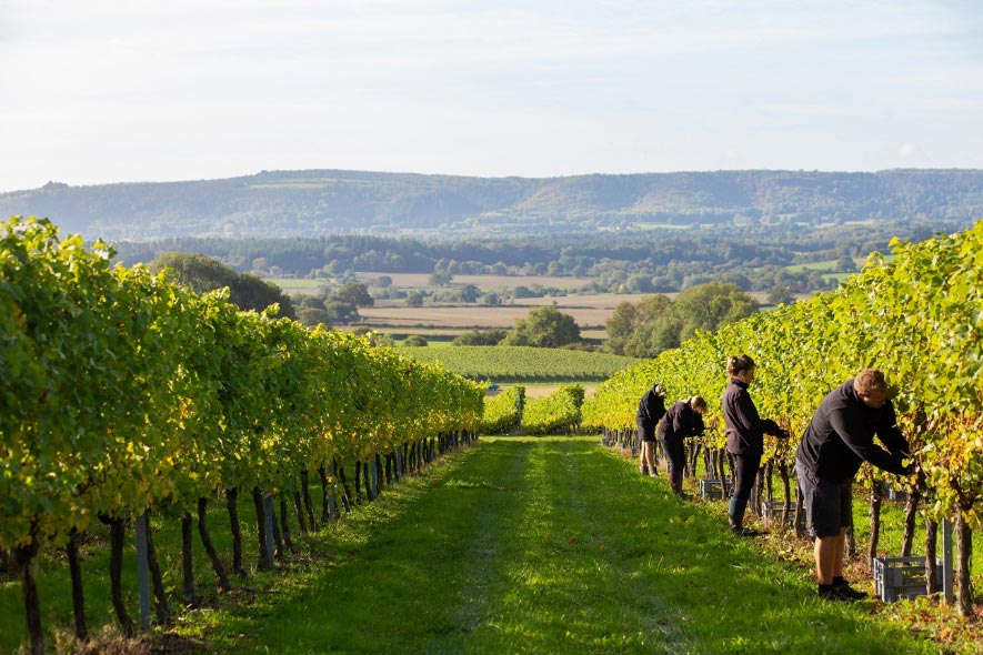 8 Classic Method English Sparkling Wines to Sip this Festive Season 3