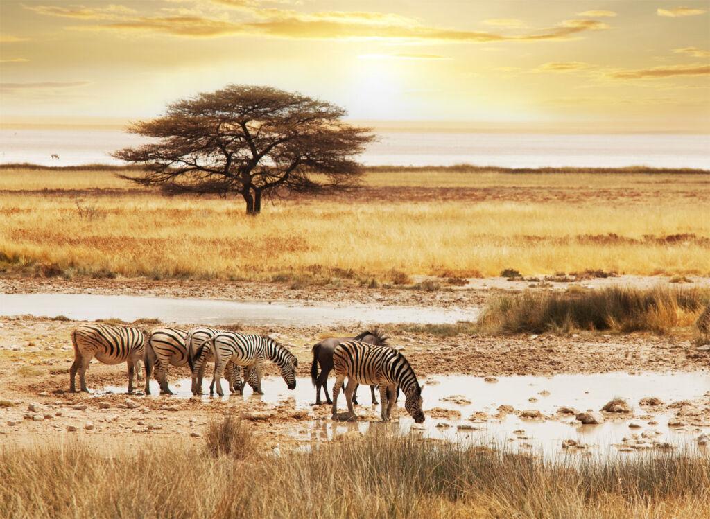 Heading out on safari to spot Zebras