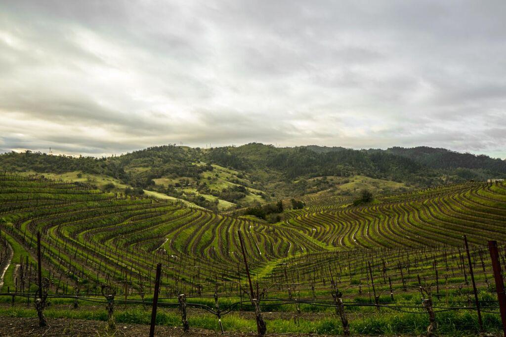 Vérité vineyard in California