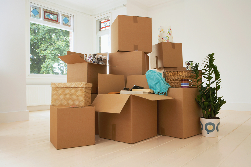 Packing boxes ready to be moved with a potted house plant