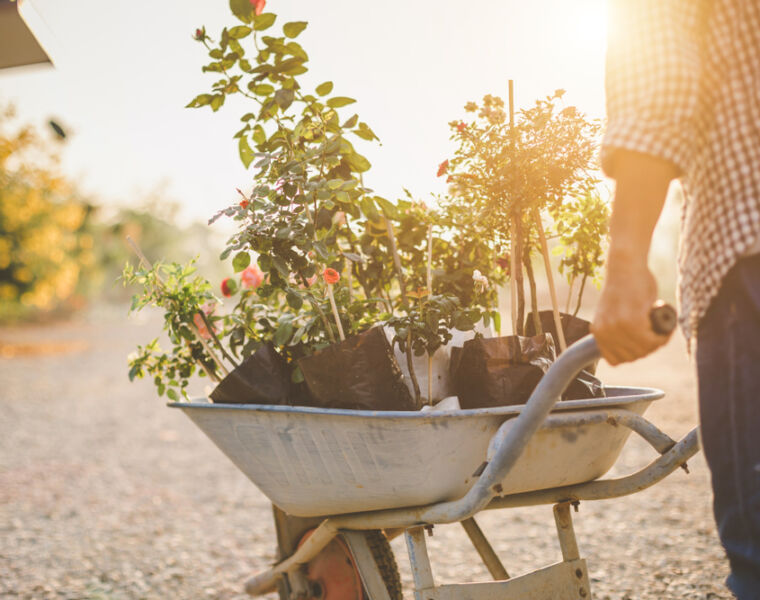 Shannen Godwin Explains the Best Way to Rehouse Your Garden Plants