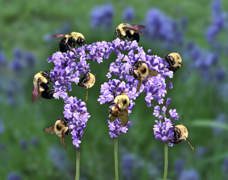 Beebombs are the Perfect Way to Spread Some Love this Spring