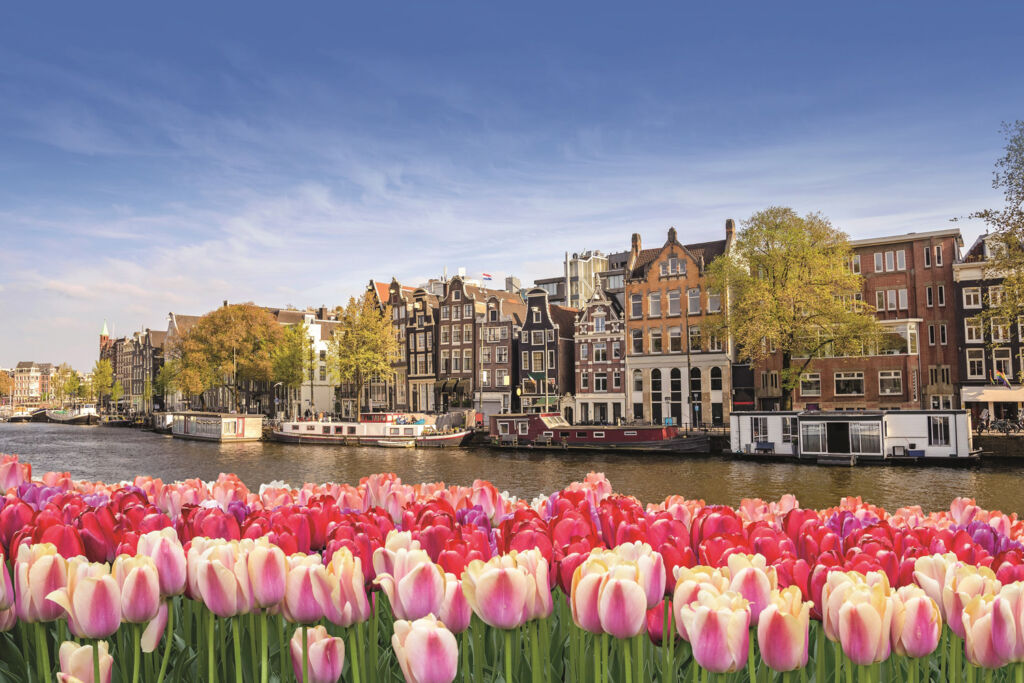 Beautiful tulips growing by the riverside in Amsterdam