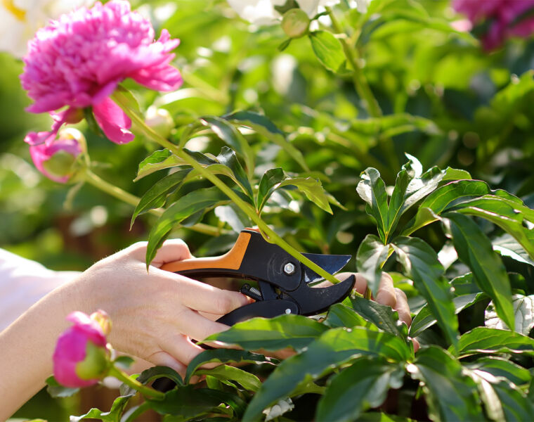Shannen Godwin pruning flowers in the garden