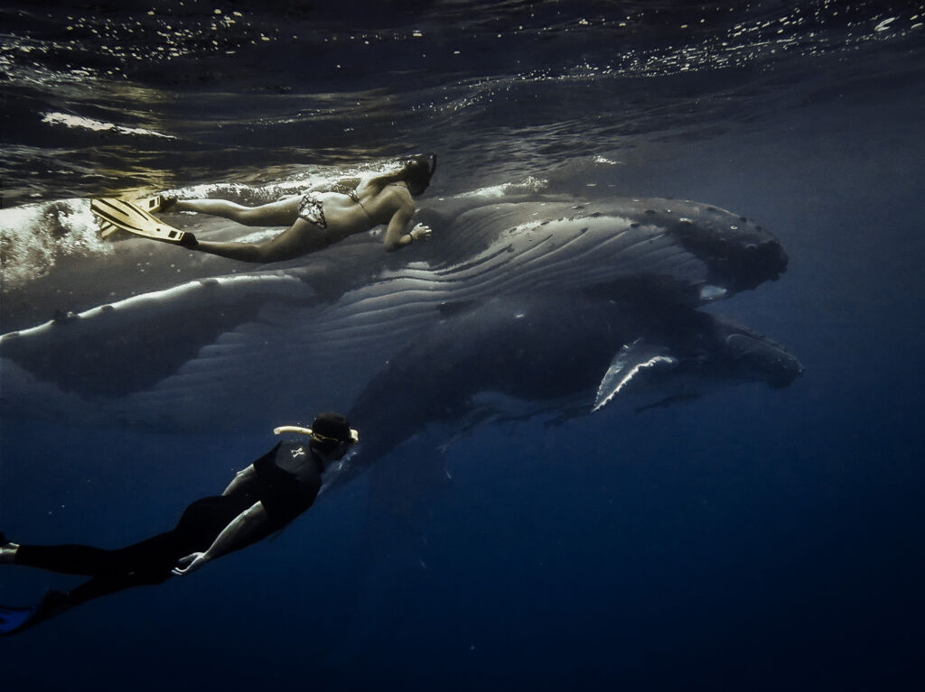 Swimming in the ocean with whales
