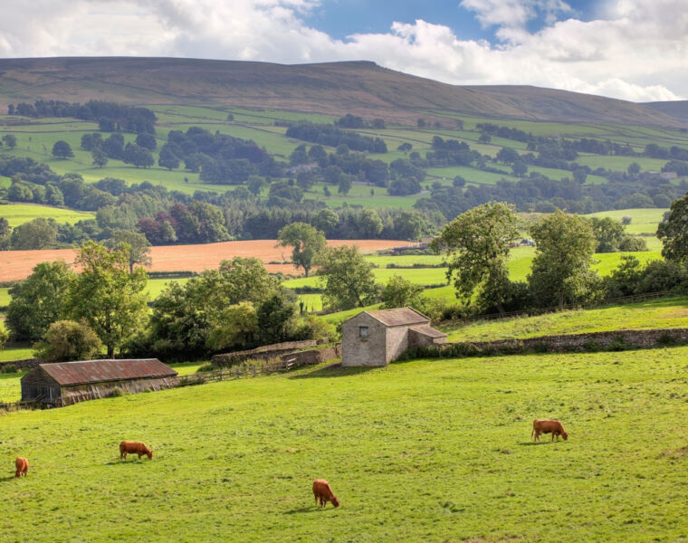 Farmison & Co Brings Heritage Meat from the Dales to Your Door