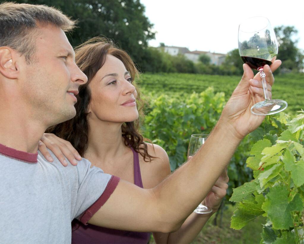 A vineyard visit in Pembrokeshire