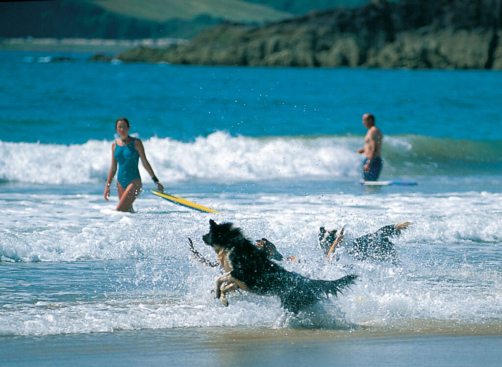 Dog playing in the surf, photo courtesy of Visit Pembrokeshire