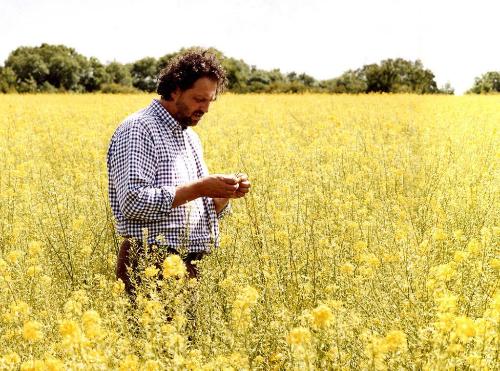 Guy Tullberg inspecting mustard seeds in a field