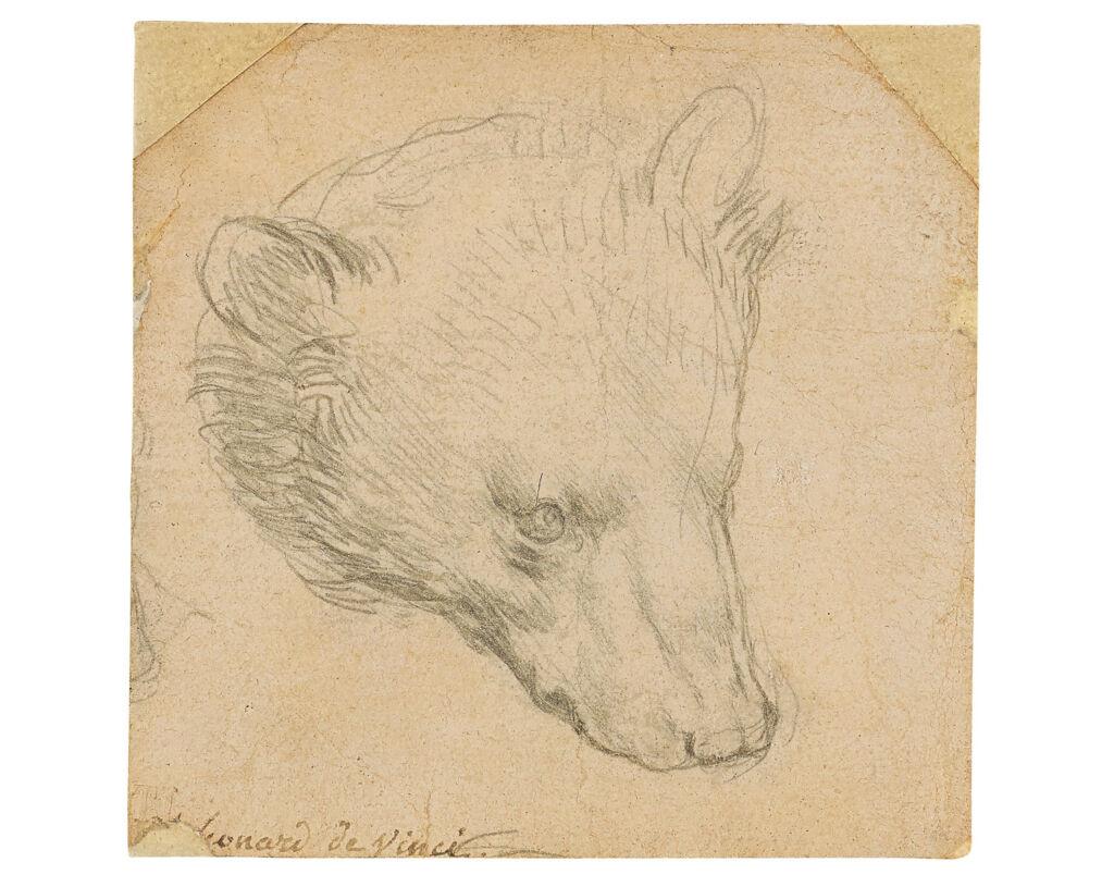 Leonardo da Vinci's Head of a Bear
