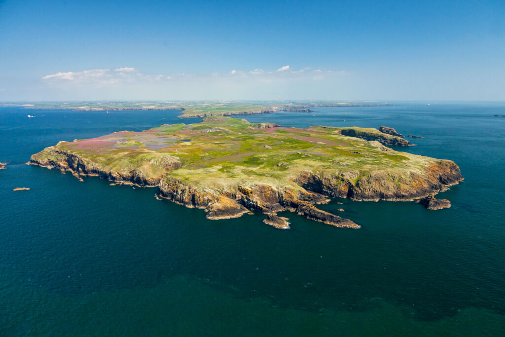 Skomer Island in Pembrokeshire, a home to Atlantic Grey Seals
