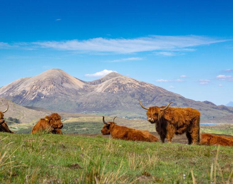 TourbyLocals can let you experience Highland cattle enjoying the sunshine on the Isle of Skye. Photo by Piotr Musiol.