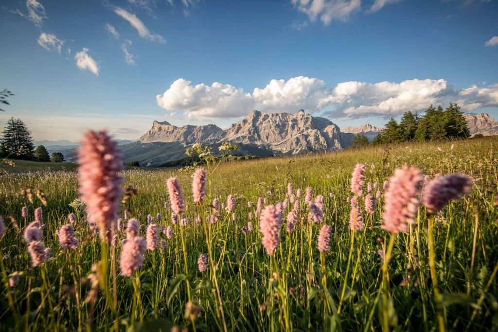 A gorgeous meadow in Alta Badia
