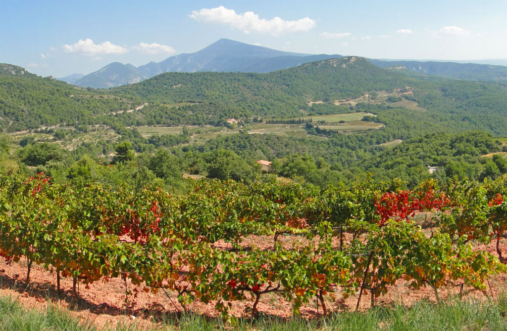 A vineyard in the hills in Ventoux France