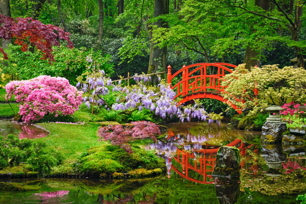 A beautiful Asian inspired garden with water feature and red painted bridge