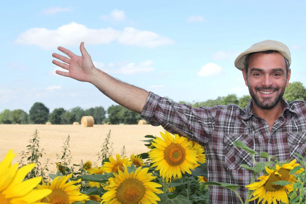 Man standing amongst sunflowers in a field