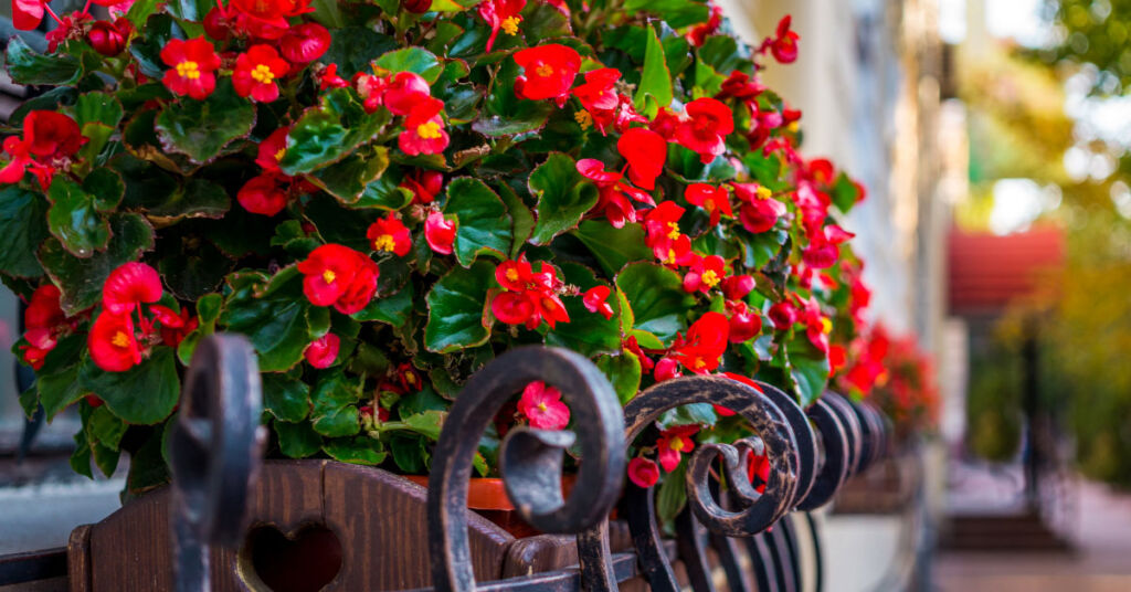 How You Can Still Get Your Garden Looking Beautiful for Summer