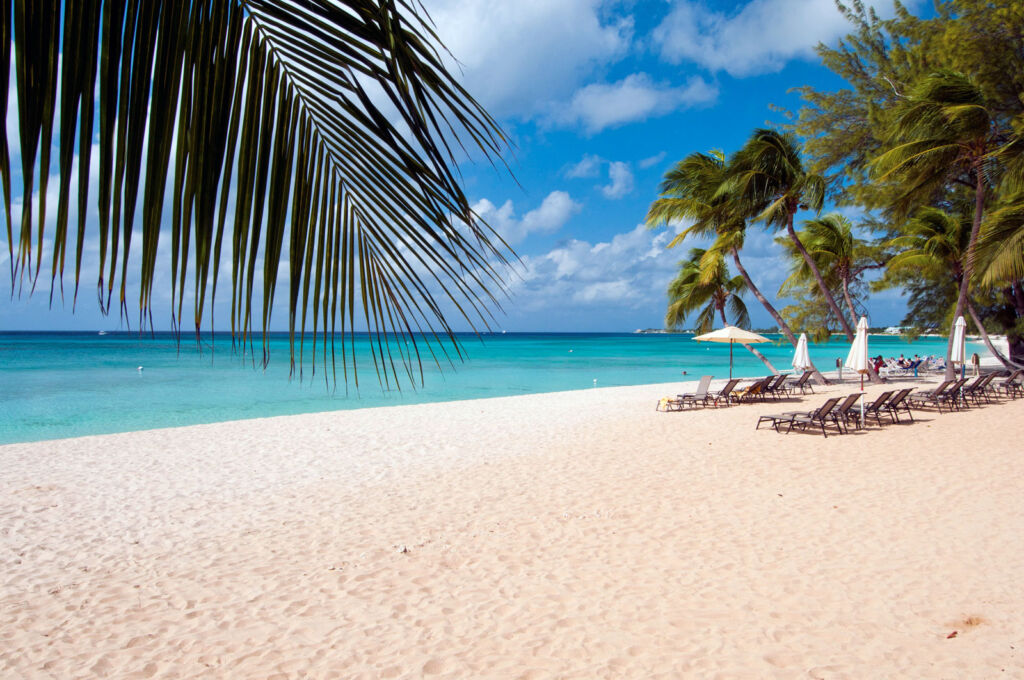 A beautiful golden sand beach with palm trees