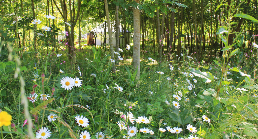 One of the yurts hidden away in the natural surroundings
