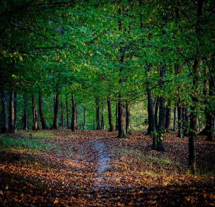 The forests in Iasi, Romania