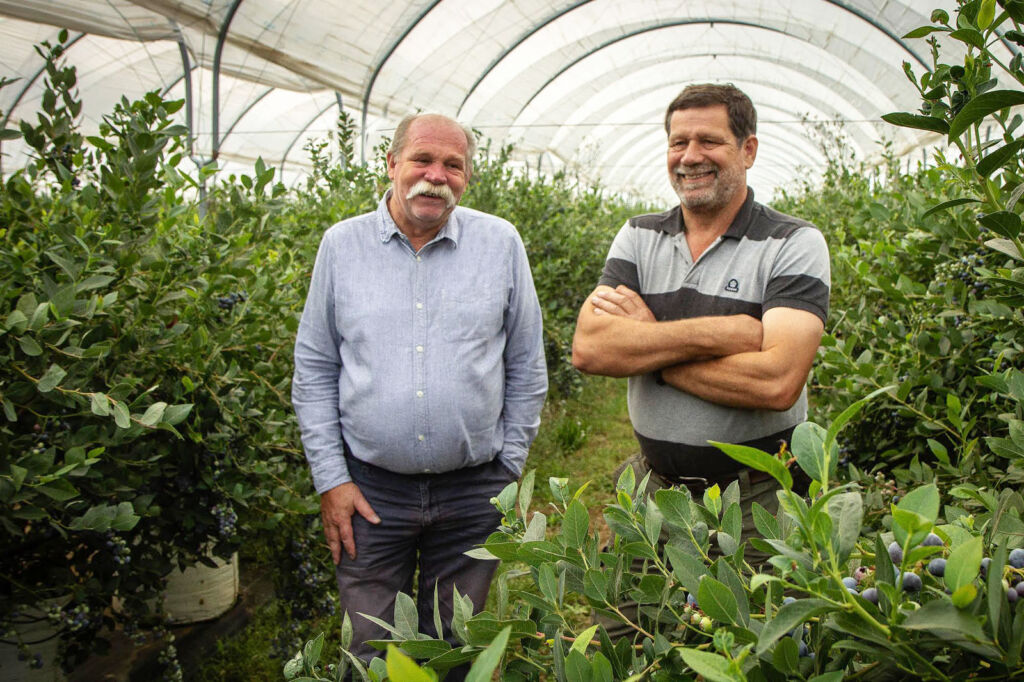 The brothers James and Stephen Long inside one of their polytunnels