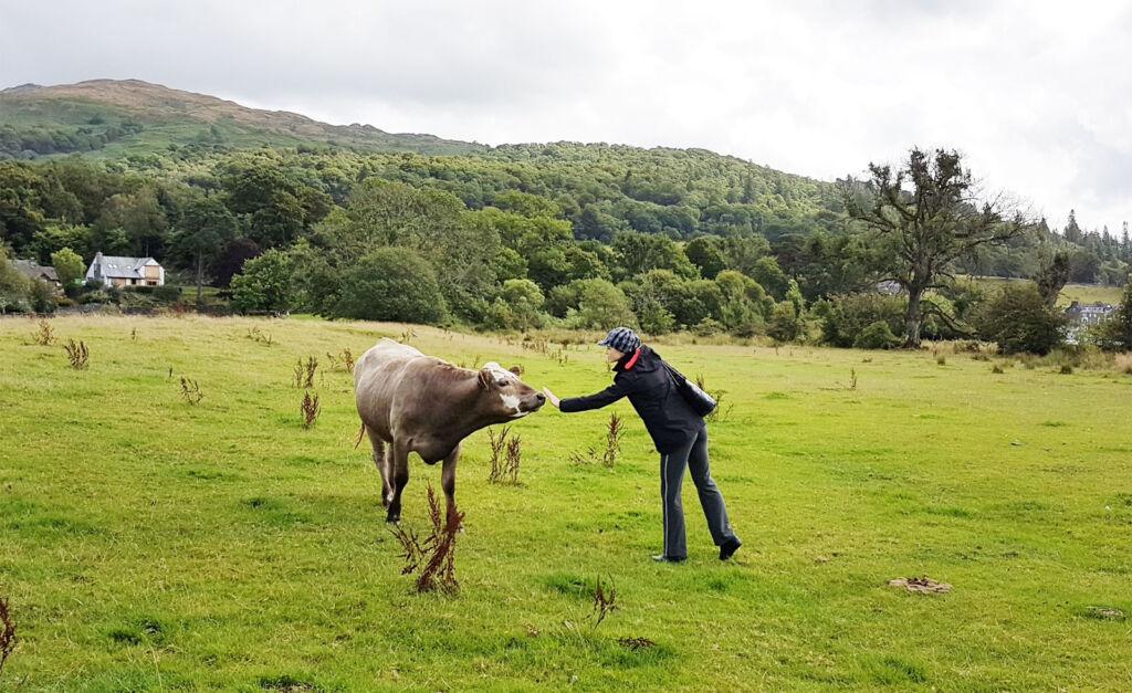 Natasha Godbold greeting a cow in the Lake District