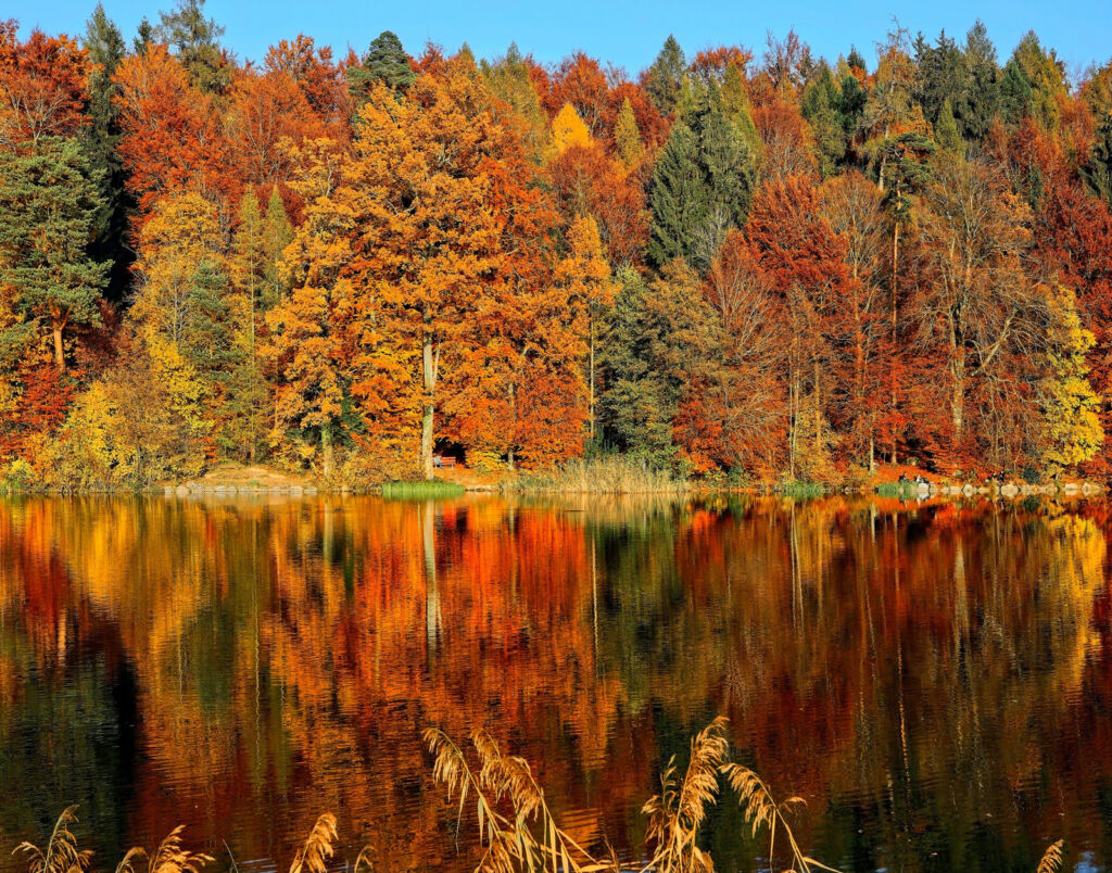 The amazing range of colours in the trees that can only be seen in the fall