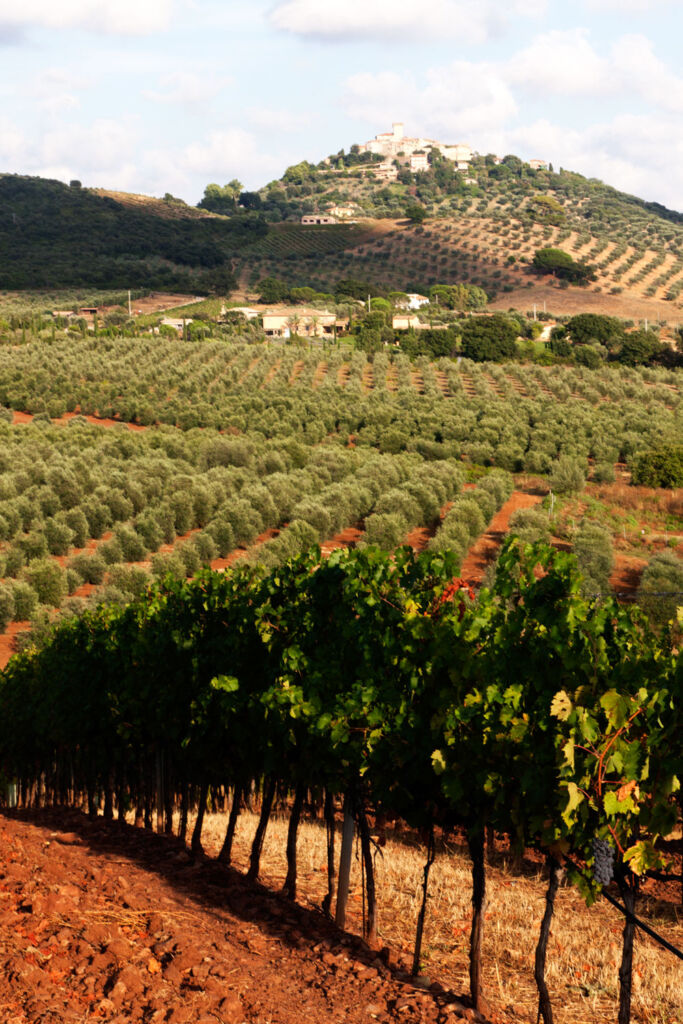 A view of the vineyards on a sunny day