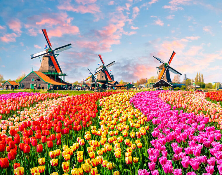 An Amazing Blooming Experience in Holland with Scenic in 2022