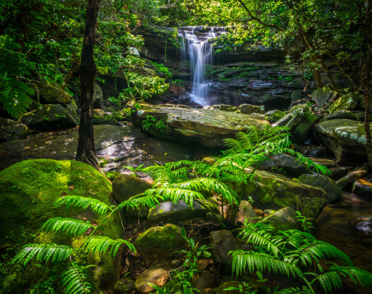 A beautiful photo of the interior of Iriomote Island taken by OCVB