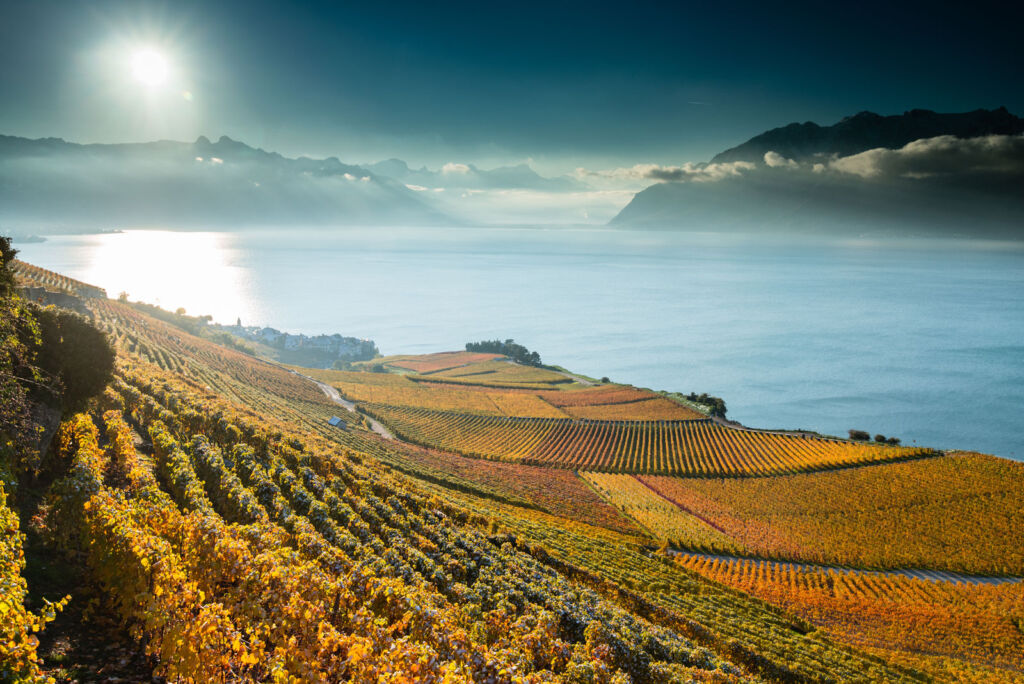 The beautiful vineyards in Autumn under bright sunshine and blue skies