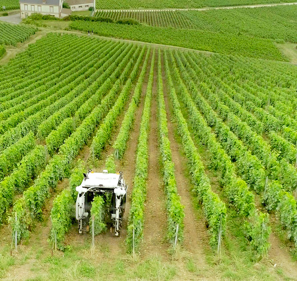 The robot moves directly over the vines ensuring that all parts are sprayed